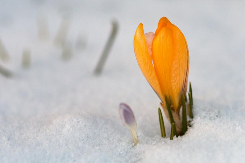 8 марта в финляндии