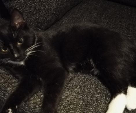 фото черной кошки