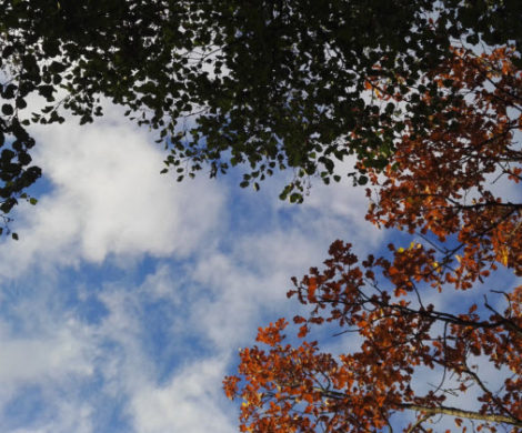 небо смотрит облаком