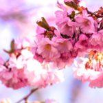 Идеи на весну