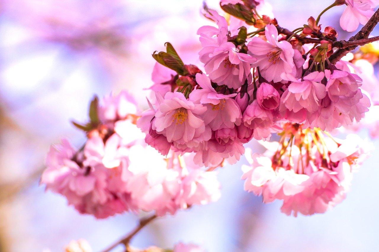 Что делать весной? Влюбленная в жизнь